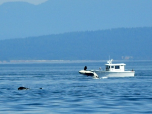 And Another J-Pod Breach (Bet they were surprised!!)