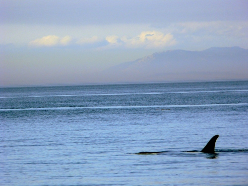 2014-10-5 SRKW Orcas Hein Bank 055