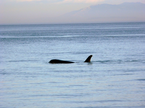 2014-10-5 SRKW Orcas Hein Bank 057