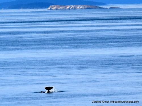 2016-6-5 Orca Lpodder