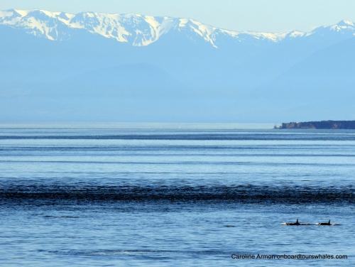 2016-6-5 Orca Lpodders