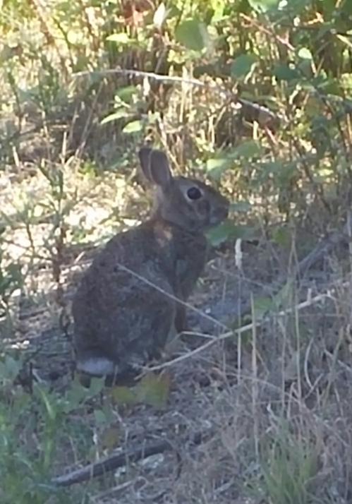 2016-7-26-rabbit-anacortes-ship-harbor
